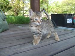 子猫ホームレス060_convert_20080615040900