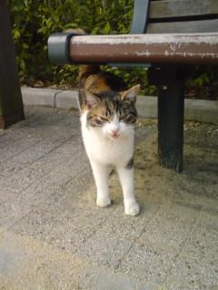 迷子三毛猫080517_0639~01