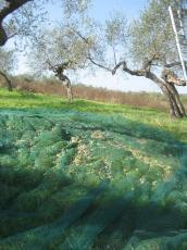 隣畑網しき
