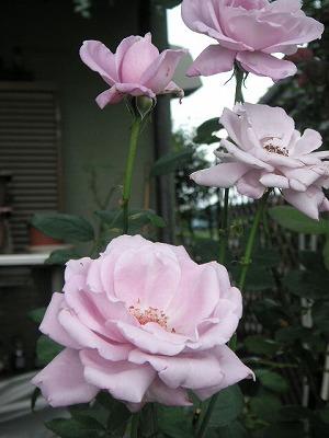 2008.07.04-15