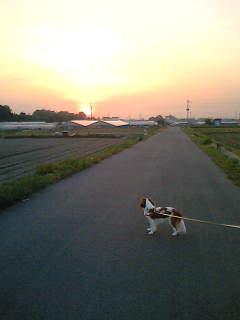 ☆夕焼け☆