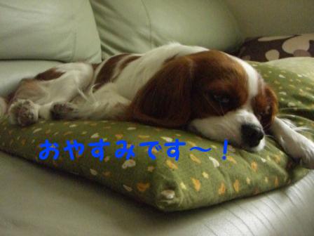 おやすみです~!