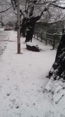 東京の冬景色2