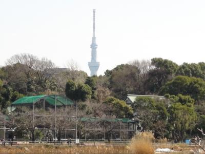 上野動物園からの東京スカイツリー