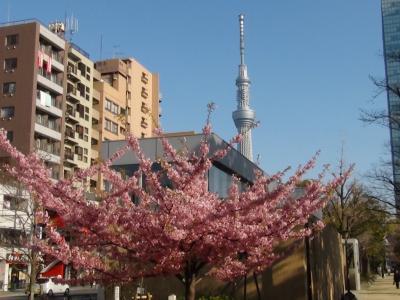 錦糸公園の早咲のサクラと東京スカイツリー