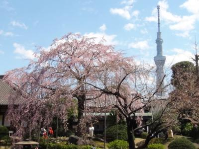 浅草寺 伝法院庭園と東京スカイツリー