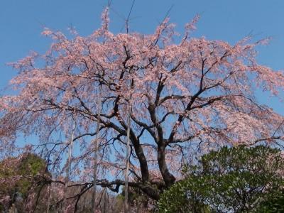 浅草寺 伝法院庭園2