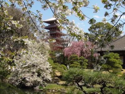 浅草寺 伝法院庭園1