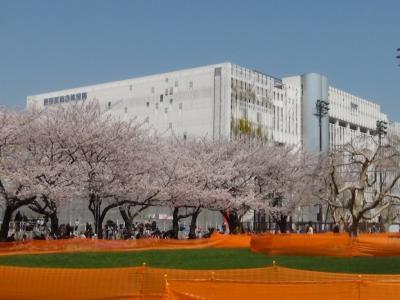 錦糸公園のサクラ