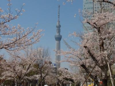 錦糸公園から見た東京スカイツリー