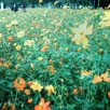 Rollei MiniDigiでの写真を発表