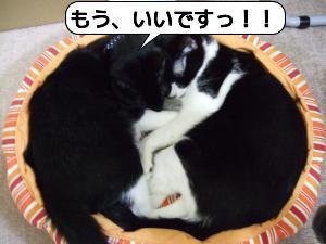 20090109_040507.jpg