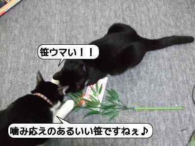20090111_042232.jpg