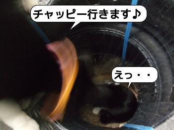 20090409_161652.jpg