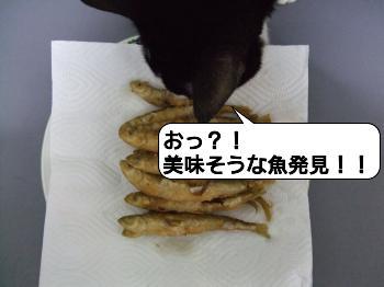 20090421_210052.jpg