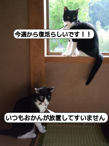 20090630_093517.jpg