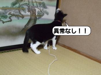 20090704_020817.jpg