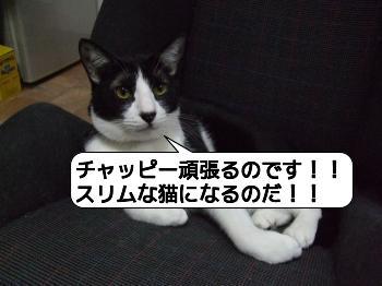 20090805_203322.jpg