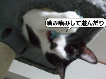 20090810_071125.jpg