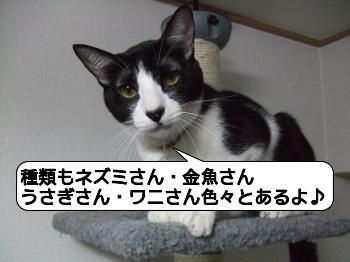 20090810_072652.jpg