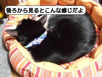 20090810_081007.jpg