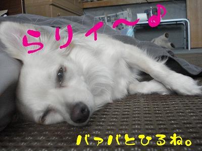 DSC05786.jpg