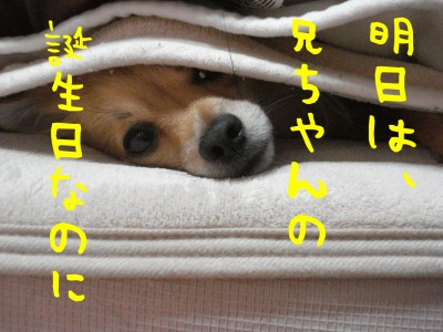 DSC06145.jpg