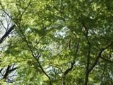 神代植物公園 4.9 もみじ