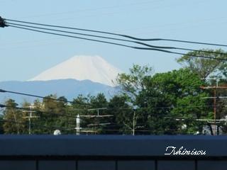 2009 4.15 朝 富士山