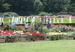 神代植物園 バラ園