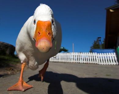 Quackery!!