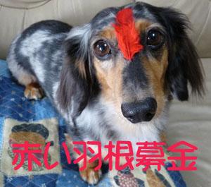 ぱーちん赤い羽根