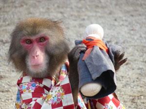猿まわし2
