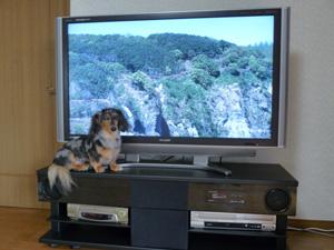 テレビ&ぱーちん