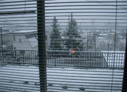 起きたら雪