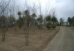 植木村の植木展示場