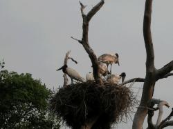 トゥユユの巣