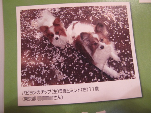 IMG_6812.jpg