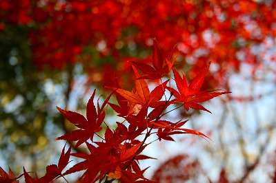 紅葉も終り・・・