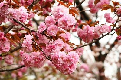 里桜2012★☆★