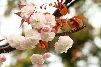 里桜2012☆☆★