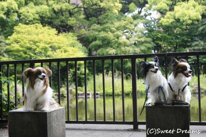 横浜公園で涼み中・・・