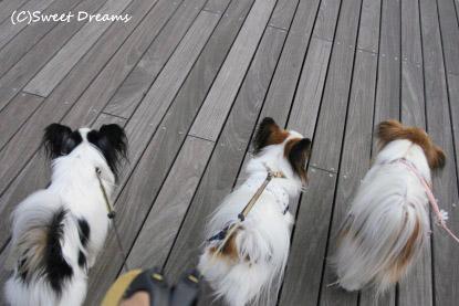 仲良く並んでお散歩!