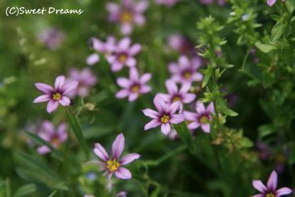 名もなき小さな花♪