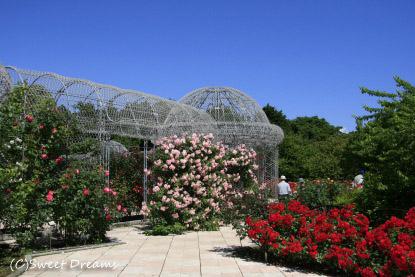 薔薇園の中・・・