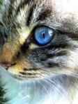ネコ(カラー)