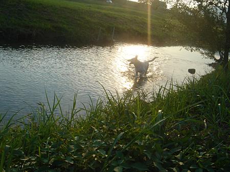夕日の中のテーオ