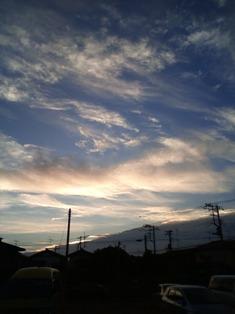 sugi8.jpg