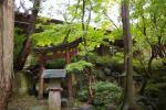 kimura27WM.jpg