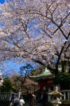 桜 厳島神社